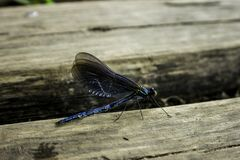 龙飞行在Plitvice,克罗地亚 库存照片