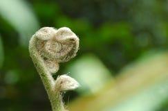水龙骨科蕨有自然背景 免版税图库摄影