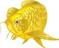 龙鱼 免版税库存图片