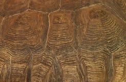 龟甲,背景 图库摄影
