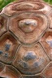 龟甲 库存照片