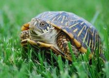 龟盒 库存图片