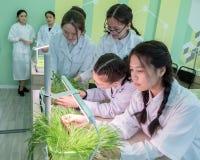 2019-09-01,哈萨克斯坦,库斯塔奈 由水栽法的增长的植物在高中实验室类 白色外套的女小学生在a 库存照片