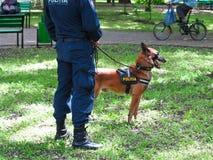 14 05 2016年,摩尔多瓦,有他的狗的警察在公园 库存照片