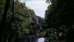 死水,有狂放,密集的植被的一个小湖 影视素材