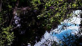 死水,有狂放,密集的植被的一个小湖 股票视频