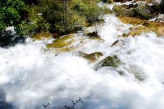 水,石头,树 免版税库存图片