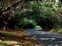 2008-03-02,考艾岛海滩推进树隧道,考艾岛 图库摄影