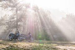 18, 2月 2017 - 使模糊在杉木森林大叻Lamdong,越南 库存图片