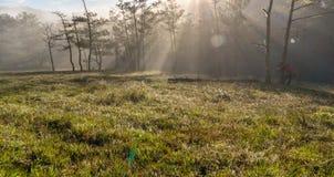 18, 2月 2017 - 光芒在杉木森林大叻Lamdong,越南里 库存图片