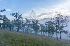 18, 2月 2017年在杉木森林的大叻雾日出背景的和beautyful云彩在大叻Lamdong,越南 免版税库存照片