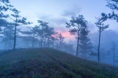 18, 2月 2017年在杉木森林的大叻雾日出背景的和beautyful云彩在大叻Lamdong,越南 库存图片