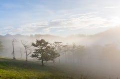18, 2月 2017年在杉木森林的大叻雾日出背景的和beautyful云彩在大叻Lamdong,越南 免版税库存图片