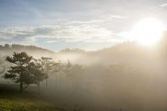 18, 2月 2017年在杉木森林的大叻雾日出背景的和beautyful云彩在大叻Lamdong,越南 库存照片