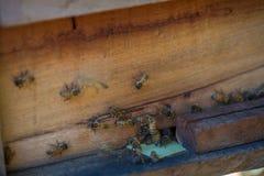 12, 2016年12月-在蜂房的蜂在大叻潜逃东越南 库存照片