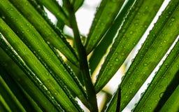 水滴,绿色叶子 库存图片