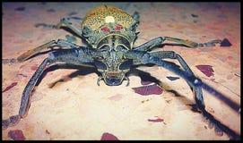 4 :甲虫2018年 免版税库存图片