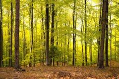 δάσος αυγής Στοκ εικόνα με δικαίωμα ελεύθερης χρήσης