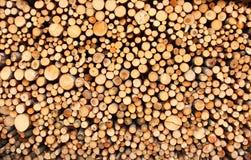 δάσος σωρών Στοκ φωτογραφίες με δικαίωμα ελεύθερης χρήσης