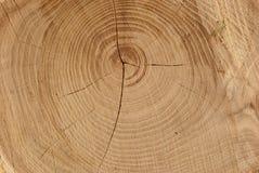 δάσος σύστασης Στοκ Φωτογραφίες