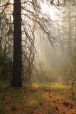 Δάσος της Misty Στοκ φωτογραφίες με δικαίωμα ελεύθερης χρήσης