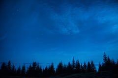 Δάσος των δέντρων πεύκων κάτω από τον μπλε σκοτεινό νυχτερινό ουρανό Στοκ εικόνα με δικαίωμα ελεύθερης χρήσης