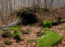 δάσος φθινοπώρου Στοκ εικόνες με δικαίωμα ελεύθερης χρήσης