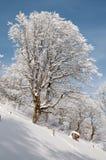 δάσος χιονώδες Στοκ εικόνες με δικαίωμα ελεύθερης χρήσης