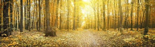 Δάσος Στοκ Εικόνα
