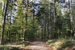 Δάσος Στοκ Φωτογραφίες