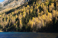 Δάσος Automn στα χρώματα πτώσης Στοκ Φωτογραφίες