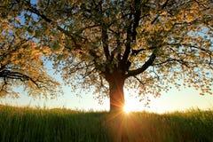 δέντρα άνοιξης άνθισης Στοκ φωτογραφία με δικαίωμα ελεύθερης χρήσης