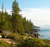 δέντρα καπνοδόχων Στοκ εικόνες με δικαίωμα ελεύθερης χρήσης