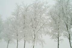 δέντρα νεφριτών Χριστουγέννων Στοκ φωτογραφία με δικαίωμα ελεύθερης χρήσης