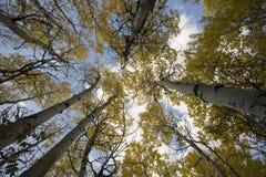 δέντρα ουρανού Στοκ Φωτογραφίες