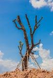 Δέντρα που φυτεύονται άφυλλα Στοκ φωτογραφίες με δικαίωμα ελεύθερης χρήσης