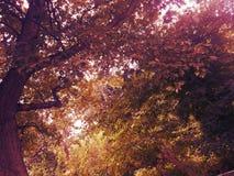 Δέντρα πτώσης Στοκ εικόνα με δικαίωμα ελεύθερης χρήσης