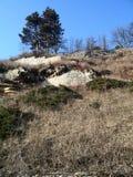 Δέντρα σε ένα πάρκο Στοκ εικόνα με δικαίωμα ελεύθερης χρήσης