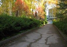 Δέντρα σε μια αλέα Στοκ φωτογραφία με δικαίωμα ελεύθερης χρήσης