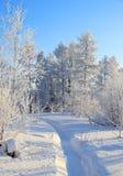 Δέντρα στο hoarfrost Στοκ φωτογραφία με δικαίωμα ελεύθερης χρήσης