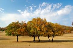 δέντρα σφενδάμνου Στοκ εικόνα με δικαίωμα ελεύθερης χρήσης