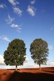 δέντρα δύο Στοκ εικόνες με δικαίωμα ελεύθερης χρήσης