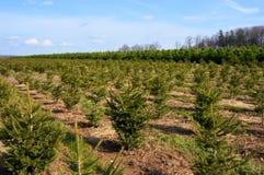 δέντρα 1 τοπίου Χριστουγέν&n Στοκ Εικόνες