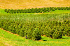 δέντρο αγροκτημάτων βρεφι Στοκ φωτογραφία με δικαίωμα ελεύθερης χρήσης