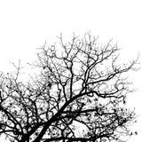 δέντρο ανασκόπησης Στοκ εικόνα με δικαίωμα ελεύθερης χρήσης
