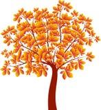 Δέντρο κάστανων, διάνυσμα δέντρων φθινοπώρου Στοκ Εικόνα