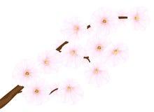 δέντρο κερασιών κλάδων Στοκ φωτογραφία με δικαίωμα ελεύθερης χρήσης