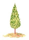 Δέντρο κυπαρισσιών Watercolor, χέρι που σύρεται και που χρωματίζεται Στοκ Εικόνα