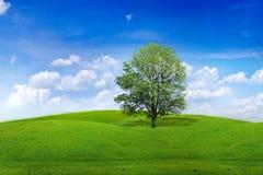 δέντρο λιβαδιών Στοκ Φωτογραφία