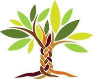 δέντρο μαλλιών πλεξίματος Στοκ Φωτογραφίες